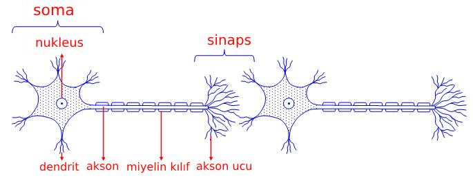 Nöral iletim