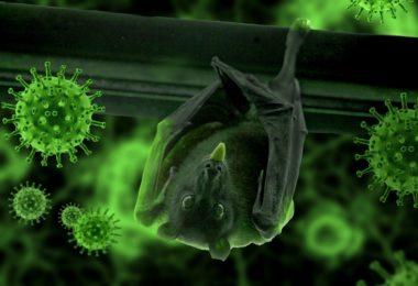 Yarasalar Virüsler İle Nasıl Baş Ediyor?