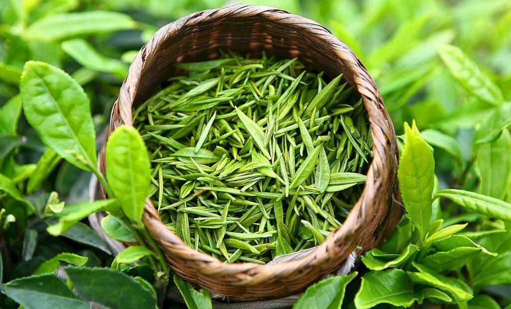 Yeşil çay yüksek kolesterolü düşürür.
